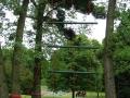L'échelle géante, dans la forêt