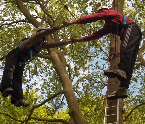 Câble divergeant dans les arbres